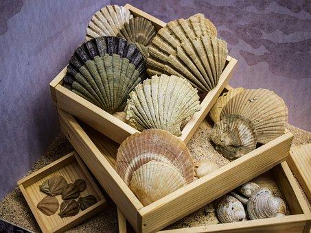 Shells, Case, Sea, Marine, Nature, Collection