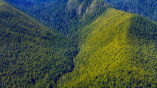 Washington, Mountains, Forest, Trees, Woods, Valley
