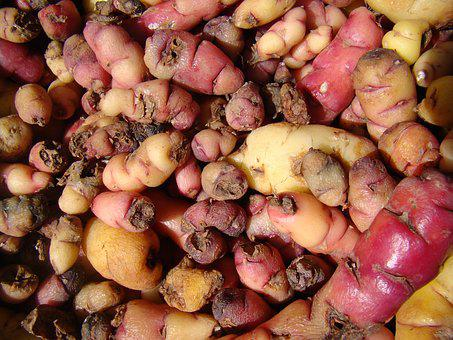 Potatoes, Colorful, Frisch, Small, Food, Eat, Healthy