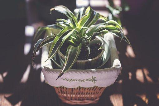 Good Morning, Office Plant, Happiness, Sunshine