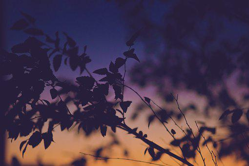 Gradient, Sky, Leaves, Sunset, Tree, Silhouette, Light