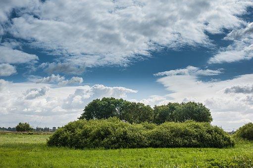 Meadow, Bush, Bäüme, Sky, Clouds, Nature, Landscape