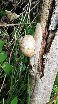 Snail, Nature, Shell, Mollusk, Slowly, Close, Spiral