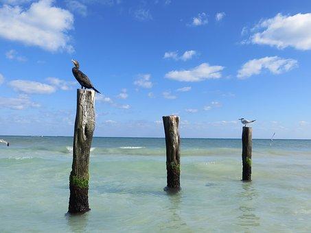 Sea Birds, Cormorant, Posts, Sea, Coast, Bird, Beak