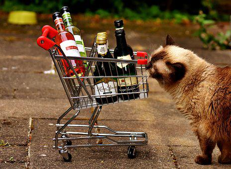Shopping Cart, Wine Bottles, Shopping, Cat, Curious