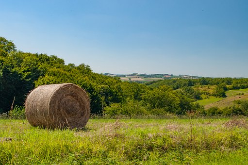 Summer, Harvest, Straw, Field, Stubble, Straw Bales