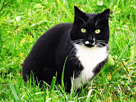Cat, Animal, Homemade, Kitten, Tomcat, Domestic Cat