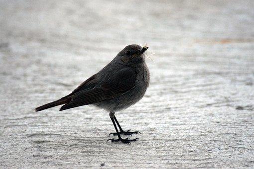 Bird, Robin, Nest Box, Animal, Bird Feeder, Nest, œuf