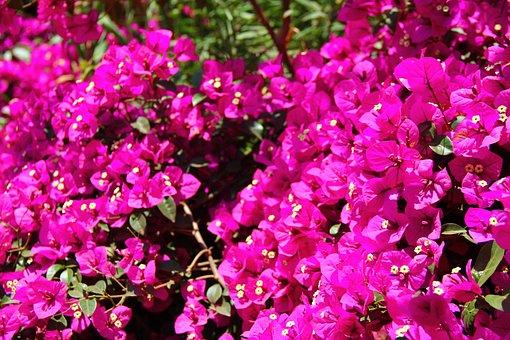 In Yunnan Province, Flowers, Landscape