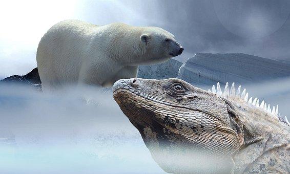 Polar Bear, Lizard, Iguana, Ice, Mountains, Snow