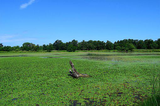 Pond, Marsh, Green, Water, Nature, Swamp, Plant, Lake