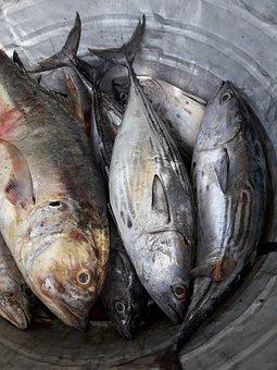 Fish, Croaker, Food, Seafood, Ocean, Raw, Fresh