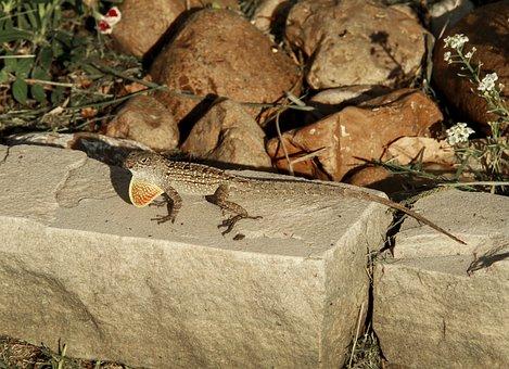 Lizard, Reptile, Small, Gecko, Colorful