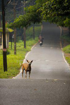 Road, Dog, Pet, Animal, Travel, Outdoor, Nature, Street
