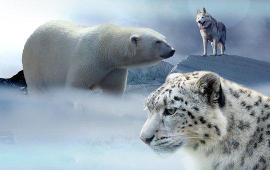Polar Bear, Husky, Leopard, Ice, Mountains, Snow, Wolf