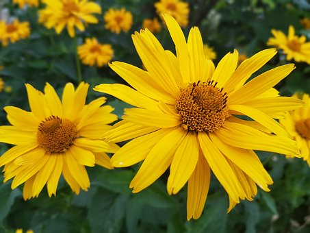 Flowers, Summer, July, Yellow