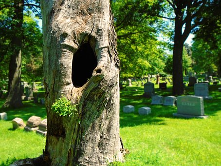 Dead Tree, Tree Hollow, Death, Cemetery, Burial Ground