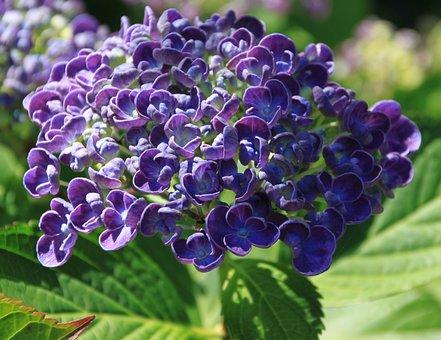 Flower, Purple, Purple Flower, Plant, Nature, Close