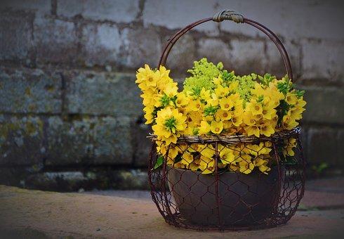 Loosestrife, Goldfelberich, Bouquet, Flowers
