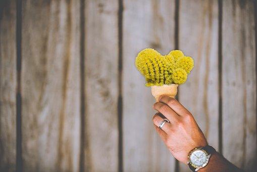 Cactus, Ice Cream Cone, Cone, Prickly, Tines, Hurt