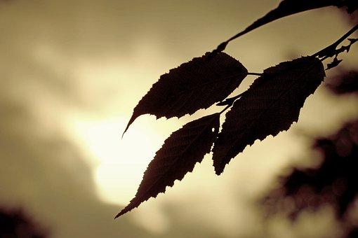 Leaf, Construction, Grass, Meadow, Nature, Landscape