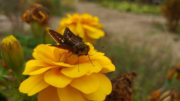 Flowers, Bug, Butterfly, Insects, Autumn, Plants, Moth