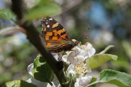 Butterfly, Field, Wings, Insect, Garden, Posing