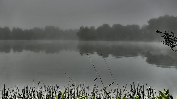 Mood, Fog, Morning Hour, Water, Lake, Pond, Reed, Bank