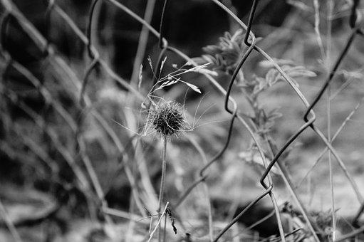 Fence, Freedom, Close, Photo, Zoom, Photography