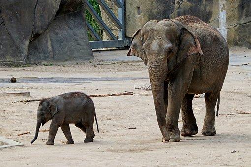 Elephant, Baby Elephant, Proboscis, Animals, Africa
