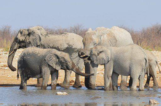 Elephant, Water Hole, Africa, Namibia, Pachyderm