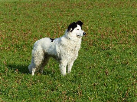 Dog, Animal, Animals, Black, White, Black White
