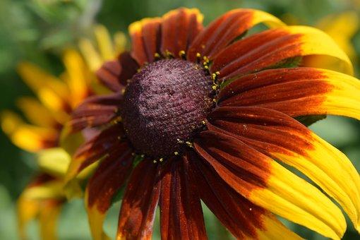 Cool Flower, Macro Flower, Colorful Flower