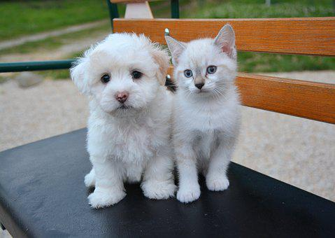 Dog Cat, Puppy, Kitten, Domestic Animal, Animals, Cat