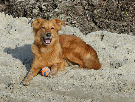 Dog, Sweet, Small, Ball, Sand, Lying, Crossing, Brown