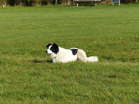 Dog, Lying, Crossing, Grass, Daddy, Watch, Black White