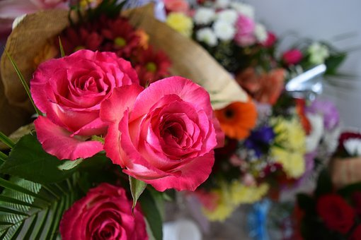Awesome Flowers, Rose Flower, Pink Rose