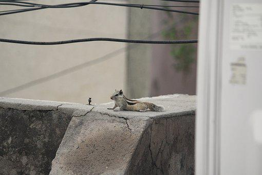 Squirrel, Relaxing, Animal, Rodent
