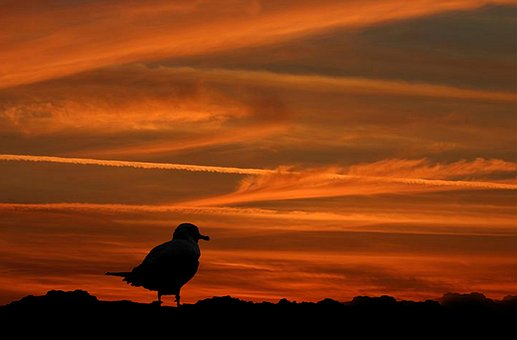 Seagull, Beach, Sunset, Atlantic City, Sea, Summer