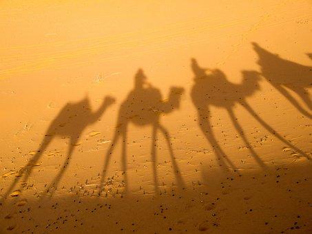 Camel, Shadow, Desert, Morocco, Dromedary, Desert Ship
