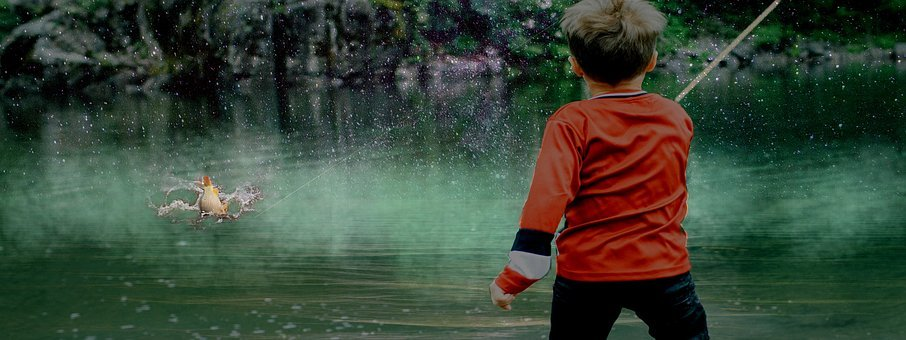 Boy, Fishing, Fish, Nature, Summer, Child, Young, Kid