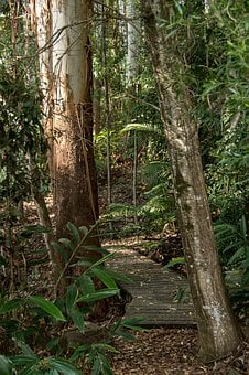 Rain Forest, Forest, Gum Trees, Eucalypts, Path, Track