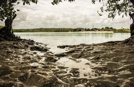 Mangue, Beach, Mud