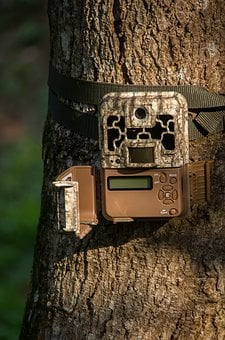 Camera, Trail Camera, Wildlife Camera, Motion Detection