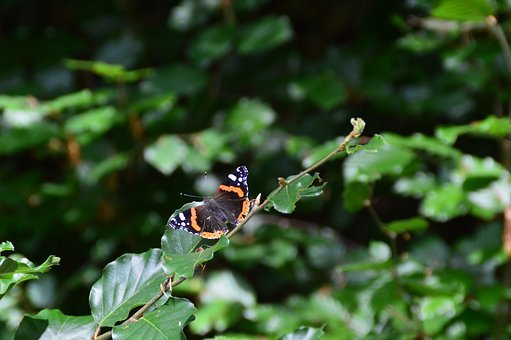 Butterfly, Nature, Insect, Close, Butterfy, Flutter Man