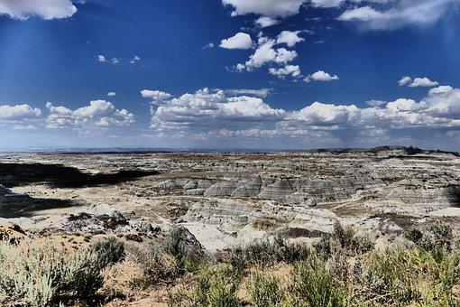 New, Mexico, Desert, Badlands, Arid, Dry, Cactus