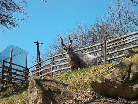 Zoo, Plzen, Pilsen Zoo