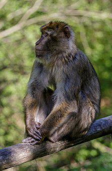 Monkey, Rest, Forest, Primate, Zoo, Relaxation, Animals