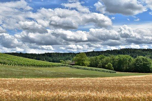 Landscape, View, Barley, Cereals, Arable, Barley Field