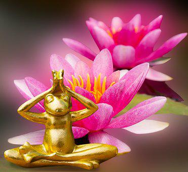 Emotions, Nature, Water Lily, Frog, Buddah, Faith